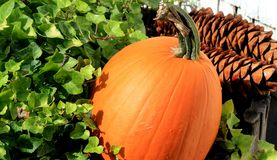 Pumpkin with green plant Royalty Free Stock Images