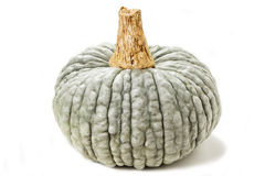 Pumpkin green Royalty Free Stock Photos