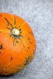 Pumpkin on grey background Stock Photos
