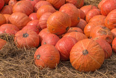 Pumpkin on ground with dry straw Royalty Free Stock Photography