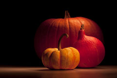 Pumpkin group Royalty Free Stock Photo