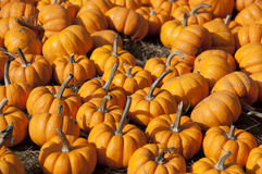 Pumpkin Group Royalty Free Stock Images