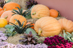 Pumpkin group on ground Stock Photography
