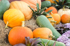 Pumpkin group on ground Stock Image