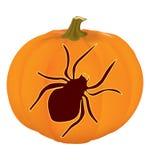 Pumpkin. Halloween carved pumpkin with spider Stock Image
