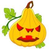 Pumpkin on halloween Stock Photo