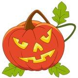 Pumpkin on halloween Royalty Free Stock Image
