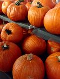 Pumpkin for Halloween Royalty Free Stock Images