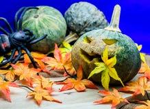 Pumpkin Halloween Stock Photos