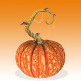Pumpkin halloween. Royalty Free Stock Photo