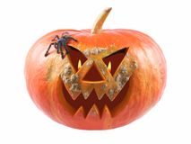 Pumpkin, halloween, old jack-o-lantern on white background with fiery flames in the eyes, and Tarantula Antilles Pinktoe Avicular stock photography
