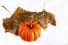 Pumpkin hallowen. Surrounded by dry autumn leaves Stock Photos