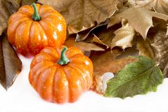 Pumpkin hallowen. Surrounded by dry autumn leaves Stock Image