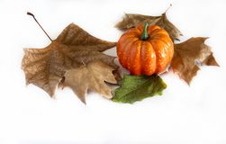 Pumpkin hallowen. Surrounded by dry autumn leaves Royalty Free Stock Photos