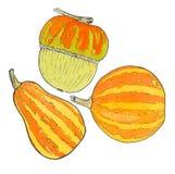 Pumpkin. Hand-drawn three different pumpkins Stock Images