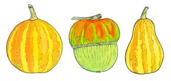 Pumpkin. Hand-drawn three different pumpkins Stock Photos