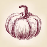 Pumpkin hand drawn vector llustration realistic Royalty Free Stock Photography