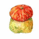 Pumpkin. Hand drawn watercolor painting on white background isolated clipping path illustration. A Pumpkin. Hand drawn watercolor painting on white background Royalty Free Stock Photo