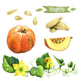 Pumpkin, hand-painted watercolor set Stock Photography