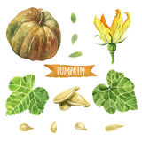 Pumpkin, hand-painted watercolor set Stock Image
