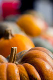 Pumpkin Harvest Stock Photography