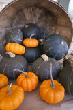 Pumpkin harvest Royalty Free Stock Image