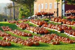 Pumpkin Harvest Royalty Free Stock Photos