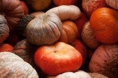 Pumpkin harvest Stock Image