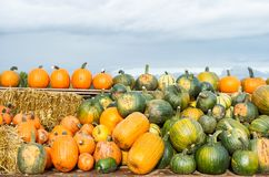 Pumpkin harvest Autumn nature background. Pumpkin harvest. Autumn nature background. Countryside Royalty Free Stock Photos