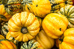 Pumpkin harvest in autumn Stock Image
