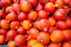 Pumpkin harvest in autumn Stock Photos