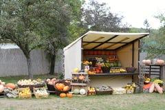Pumpkin Harvest in a Booth in a Garden, Czech Republic, Europe Stock Images