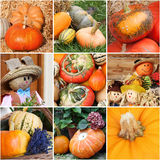 Pumpkin harvest collage Royalty Free Stock Photo