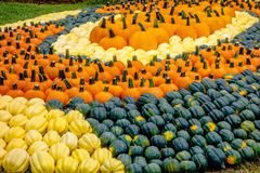 Pumpkin and harvest decorations for the holidays Royalty Free Stock Photo
