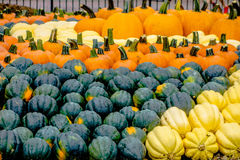 Pumpkin and harvest decorations for the holidays Stock Photo