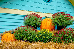 Pumpkin and harvest decorations for the holidays Royalty Free Stock Photos