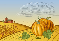 Pumpkin harvest landscape Stock Photography