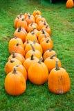 Pumpkin Harvest Stock Images