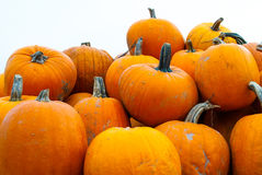 Pumpkin harvest Royalty Free Stock Images