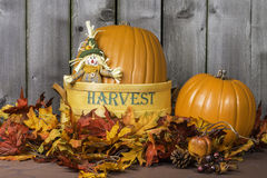 Pumpkin Harvest Royalty Free Stock Photography