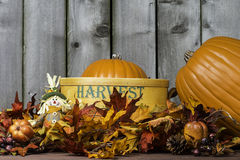 Pumpkin Harvest 3 Stock Photo