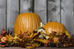 Pumpkin Harvest 4 Stock Photography