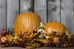 Pumpkin Harvest 4 Stock Photography