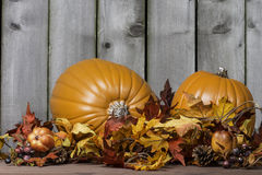 Pumpkin Harvest 6 Royalty Free Stock Photography