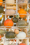 Pumpkin harvest season on the shelves Stock Photo
