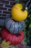 Pumpkin Harvest Sweet Variety for Cooking in Fall Colors Royalty Free Stock Photography
