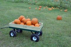 Pumpkin Harvest Royalty Free Stock Image