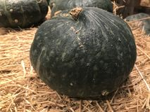 Pumpkin harvested in the nature, stock photo