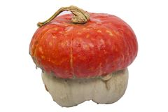 Pumpkin with hat Stock Image