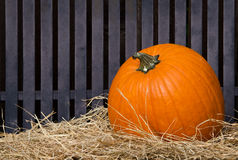 Pumpkin on hay Stock Images